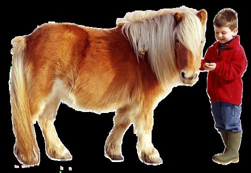 """Résultat de recherche d'images pour """"poney fond transparent"""""""