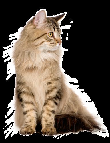 Les chats 0_d6c76_1976dd00_L