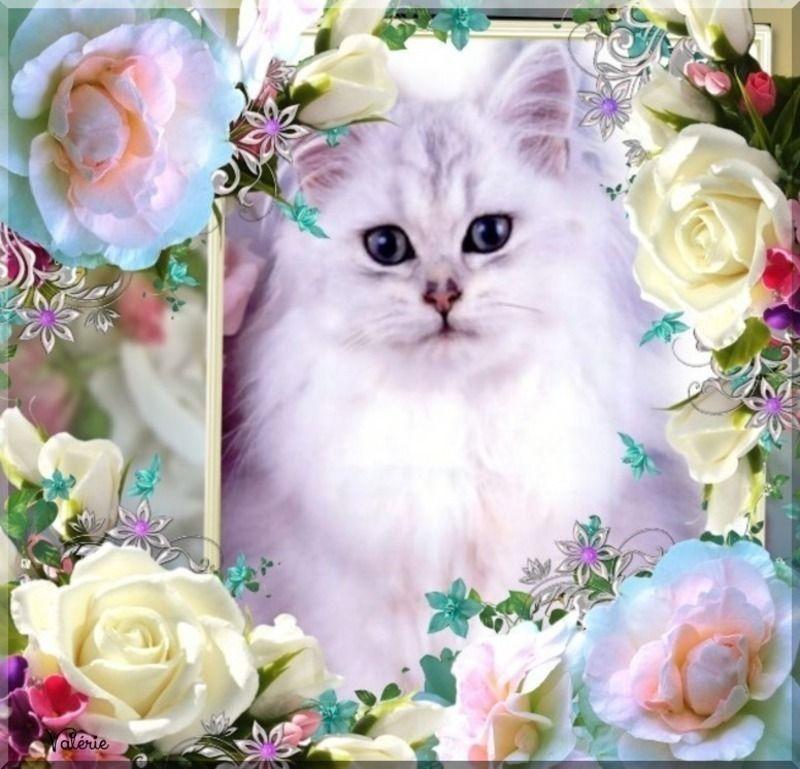 Les chats - Page 39 Oie_CqlFewDpfUSr