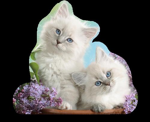 Les chats - Page 36 Oie_pP5E7Cmih9ji_1_1